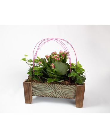 Kalanchoe and ivy planter