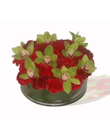 Georgeous green cymbidiums  and  red roses!