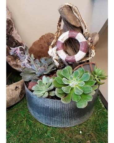 indoor succulent garden plant - Indoor Succulent Garden