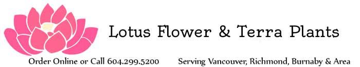 Burnaby Florist Flower Delivery By Lotus Flower Terra Plants