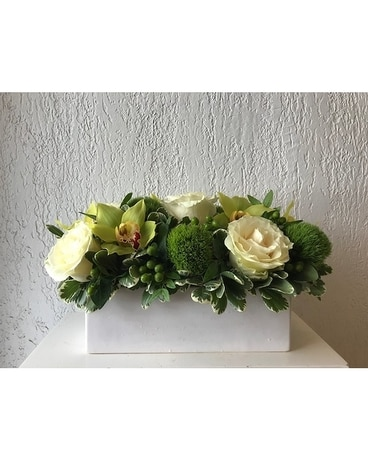 white jasmine in toronto on bloominghill flowers
