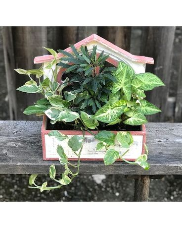 Window Box Planter Plant