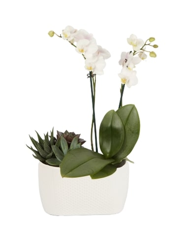 Orchids and Succulent Plant