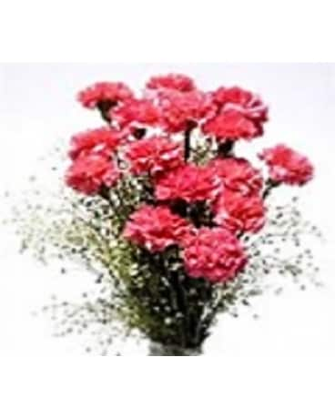 12 Carnations Wrap with Babies Breath