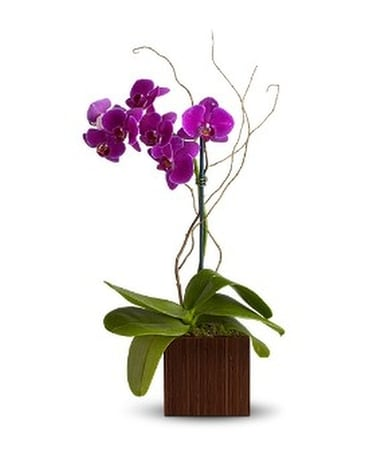 Teleflora's Bamboo Elegance - by Flowers by Michae Flower Arrangement