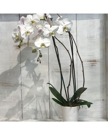 Journey Orchid Flower Arrangement