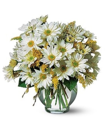 Daisy Cheer - by Cherryland Floral & Gifts, Inc. Flower Arrangement
