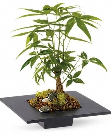 Money Tree Flower Arrangement