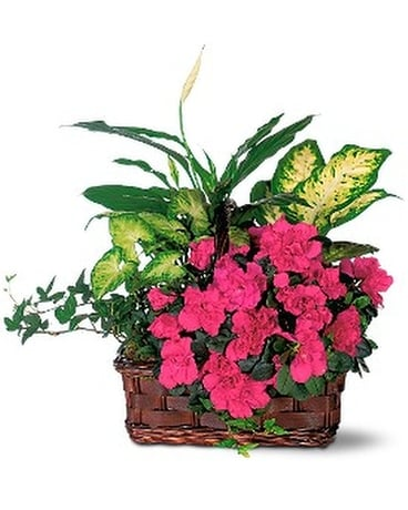 Azalea Attraction Garden Basket Flower Arrangement