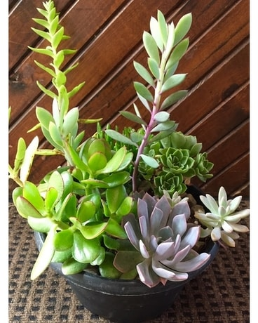 Success in Succulents Plant