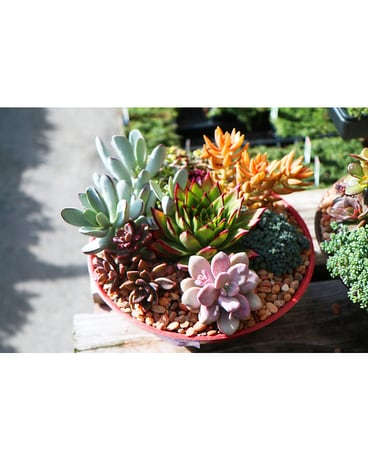 Succulents Flower Arrangement