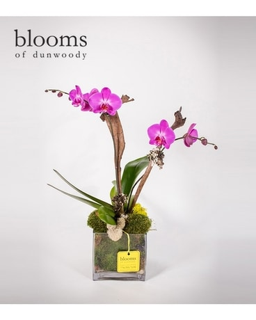 Purple Double Orchid in Glass Cube Plant