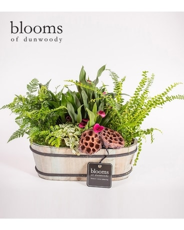 Blooming Plant Composition in Wooden Box Plant