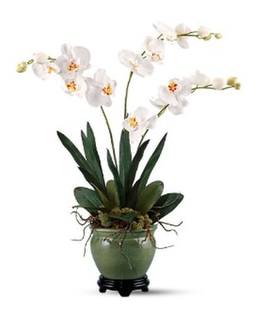Orchids Forever by Teleflora Flower Arrangement