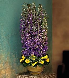 Florist Kingston Pa Robin Hill Florist Kingston Flowers