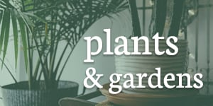 plants and Garden in Baltimore