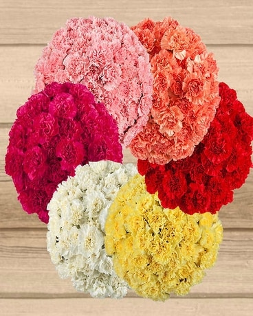 Carnation Growers Bunch $24.95 (25 stems) Flowers