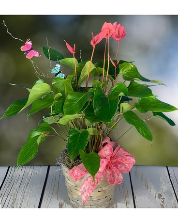 Fluttering Anthurium Flower Arrangement