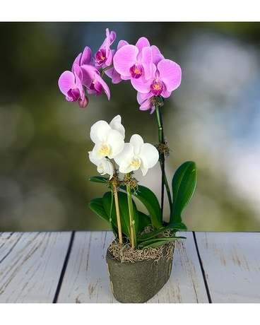Orchid Embrace Flower Arrangement