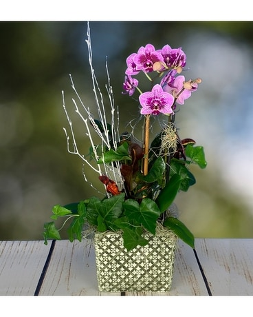 Woodland Orchid Flower Arrangement