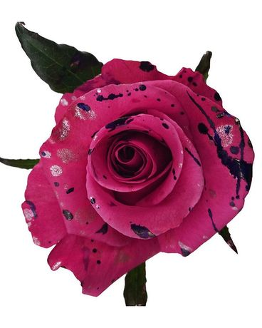 SUMMER SALE - DOZ Blueberry Splash Roses Flower Arrangement