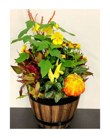 Mixed Fall Patio Planter Flower Arrangement