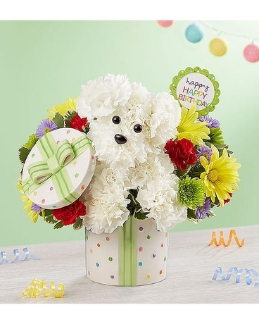 Party Pooch from 1800flowers