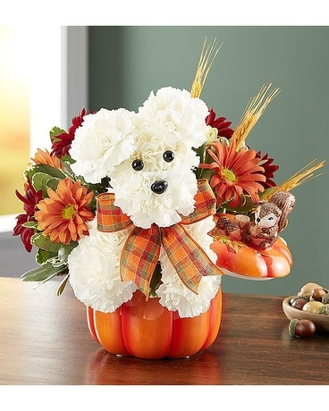 A Dog Able For Fall By 1800flowers In Los Angeles Ca 1 800 Flowers Conroys