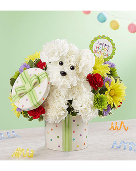 Party Pooch from 1800flowers Flower Arrangement