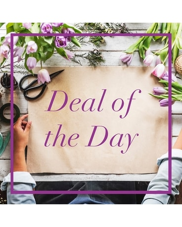 Blooming Plant - Deal of the Day Flower Arrangement