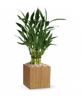 Teleflora's Good Luck Bamboo Flower Arrangement