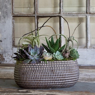 Stylish Succulent Garden Custom product