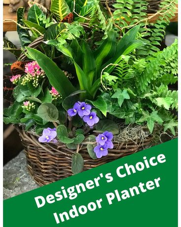 Designer's Choice - Indoor Planter Plant