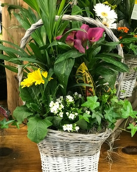 Baskets of Happiness Mixed Planter Plant