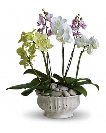 Regal Orchids - by Touch of Flowers Flower Arrangement