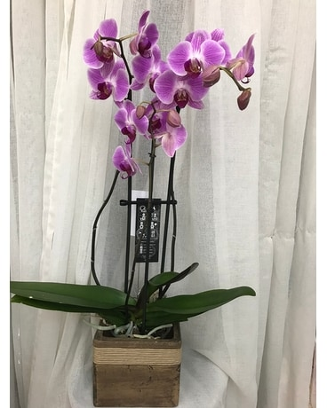 Phalaenopsis Orchid Flower Arrangement