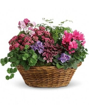 Simply Chic Mixed Plant Basket Flower Arrangement