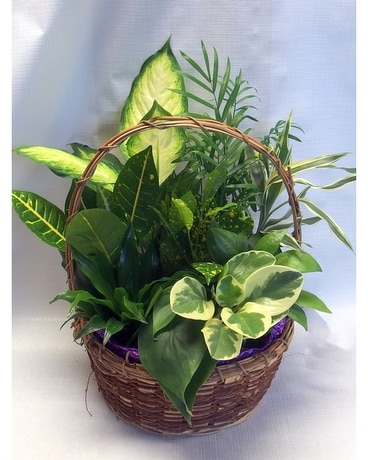 Wicker Basket Planter Dish Garden Plant