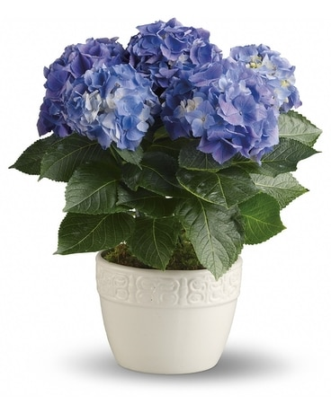 Happy Hydrangea - Blue Flower Arrangement