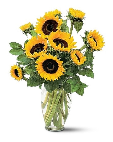 Shining Sunflowers Custom product