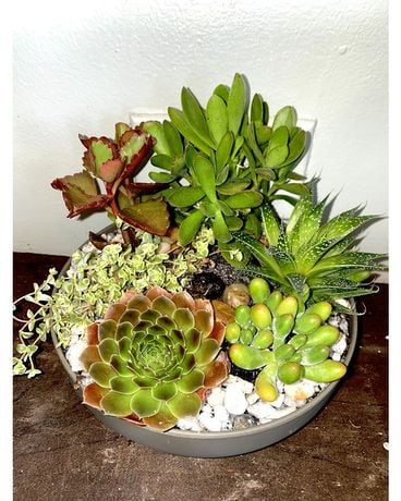Garden of Succulents Flower Arrangement