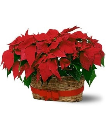 Double Poinsettia Basket Centerpiece