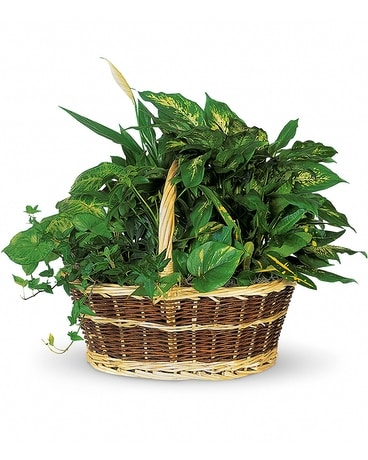 Plant Basket Flower Arrangement