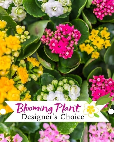 Designer's Choice Blooming Plant Flower Arrangement