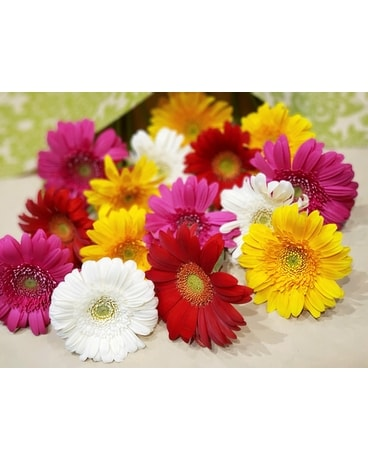 Mini Gerbera Daisy Bouquet Flower Arrangement