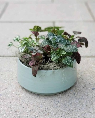 Polka Dot Planter Plant