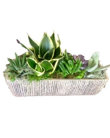 Medium Succulent Garden Flower Arrangement