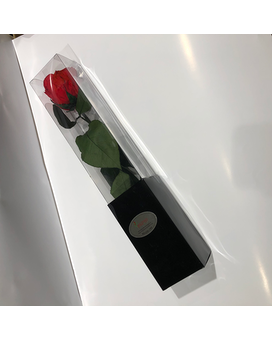Single Preserved Rose Flower Arrangement