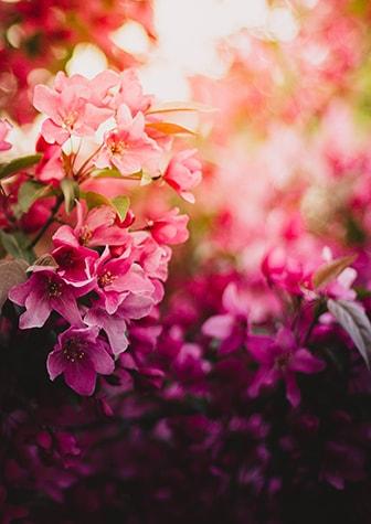 About jacksons flowers portland or florist mightylinksfo