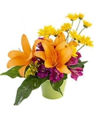Sending Sunshine by Lovebird Flowers Flower Arrangement